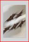 Thumb_318_nts_poster